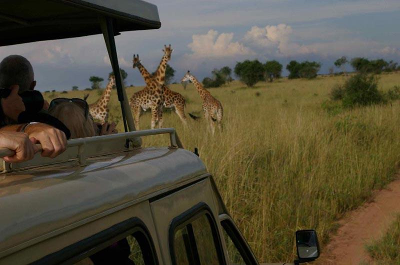 5 Days Murchison Falls & Queen Elizabeth Park Safari Tour