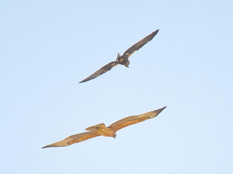 Muscat Bird Watching Trip Package