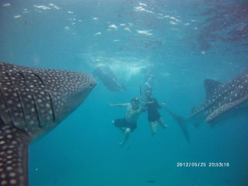 Whale Shark Swimming + Sumilon Island + Moalboal Island Hopping Tour