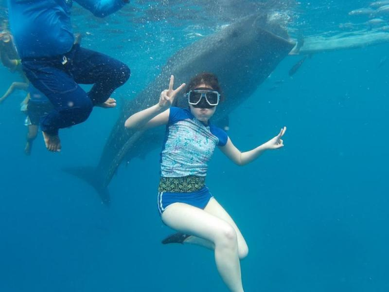 Whale Shark Swimming + Kawasan Falls + Moalboal Island Hopping Tour