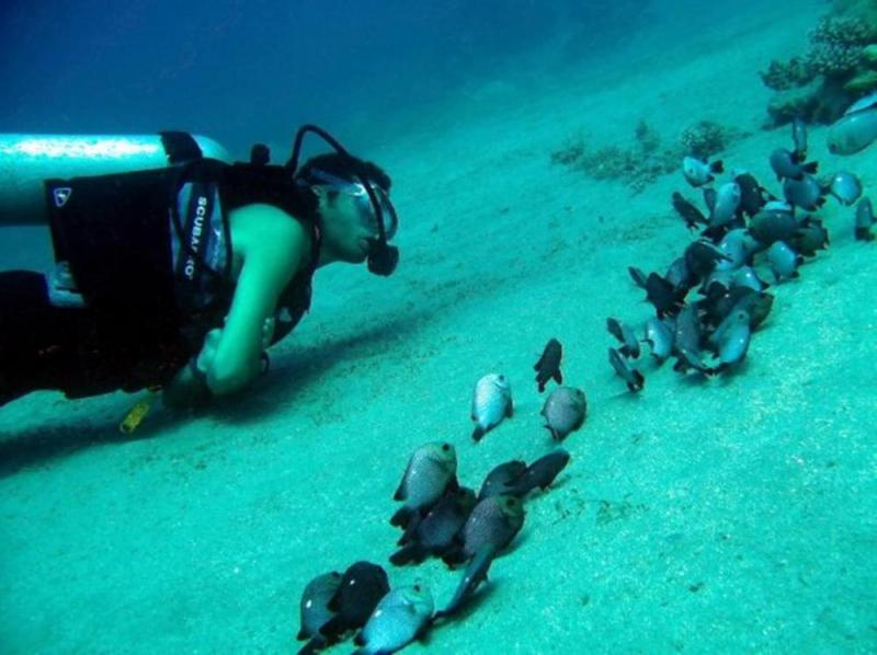 Dive Aqaba & Golden Triangle Package
