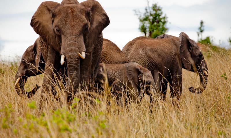 9 Days Okavango Delta & Victoria Falls Camping Package