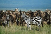 Great Camps Of Kenya Tour
