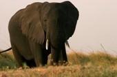 Tanzania Tented Migration Safari Tour