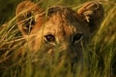 Southern Africa Five Rivers Build Your Own Safari Tour