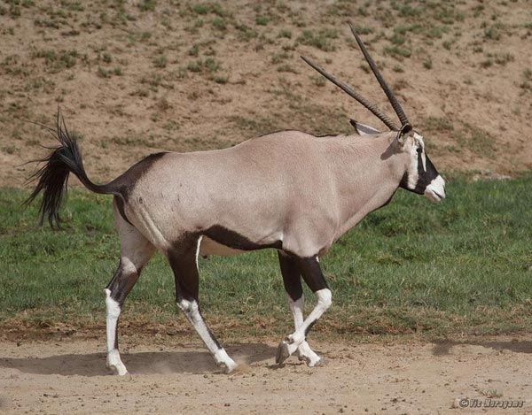 Overnight Exclusive Ambassador Private Wildlife Safari Package