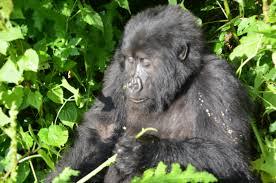 10 Days Primate Safari Package