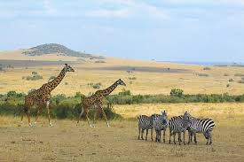 Kenya Safari - Four Star Option Packages