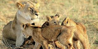 Masai Mara Tour & Birds Watching Package