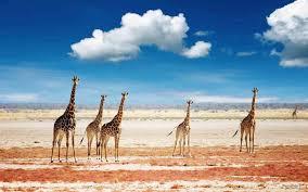 Tanzania Safari 1 Tour