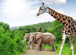 Tours Of South Africa Package