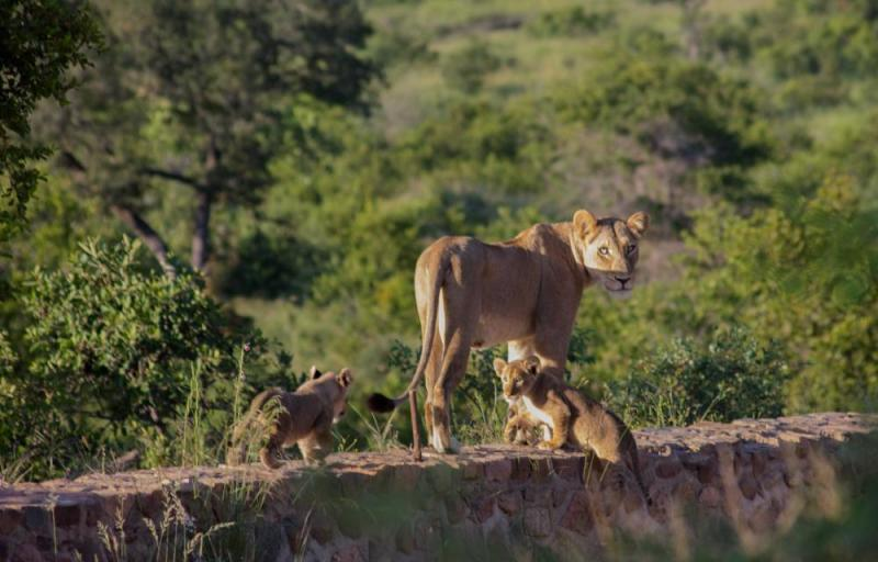 Kruger National Park 1 Day 1 Night Magical Safari From Johannesburg Package