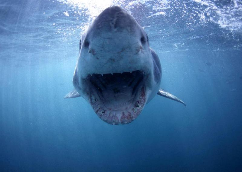 2 Days Best Of The Cape Tour With Shark Diving Multi Day Tour Package