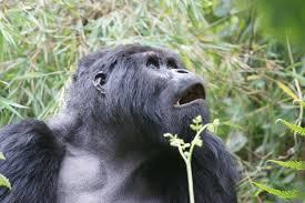 11 Days Gorilla And Tanzania Safari Tour Package