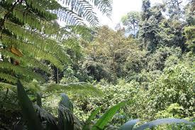 15 Days Uganda Wilderness Safari Package