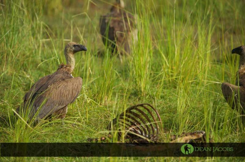 18 Days Birds Of Africa Safari Package