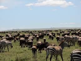 11 Days Tanzania - Uganda Adventure Tour Package