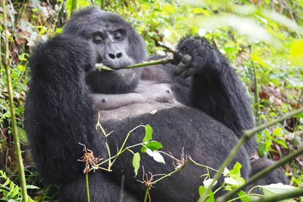10 Days Rwanda Gorilla Pride Package