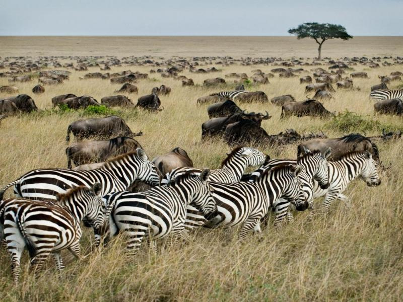 4 Days Masai Mara And Lake Nakuru Camping Safari Tour