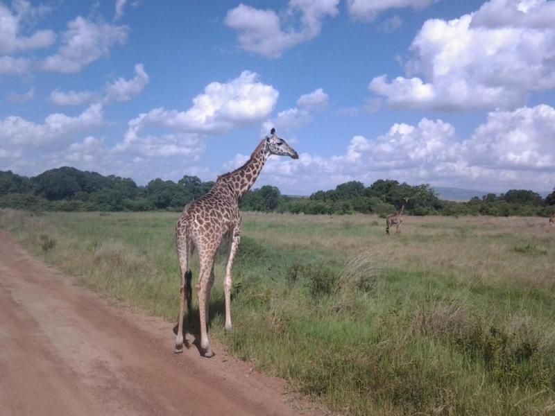6 Days Budget Kenya Safari Package