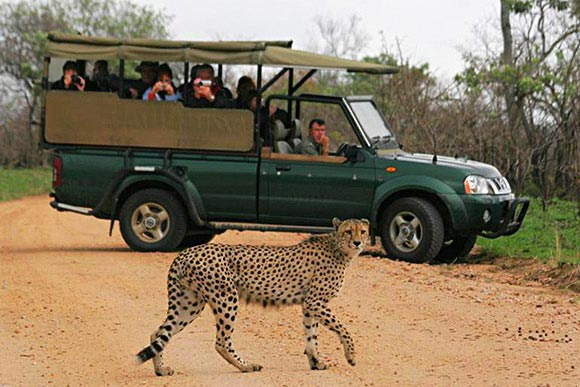 4 Days Classic Tanzania Safari Package