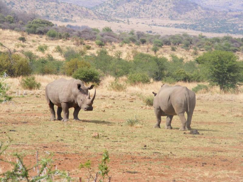 Pilanesberg Game Reserve - Big 5 Package
