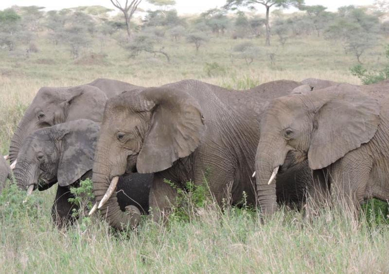 10 Days Explore Tanzania Safari Package