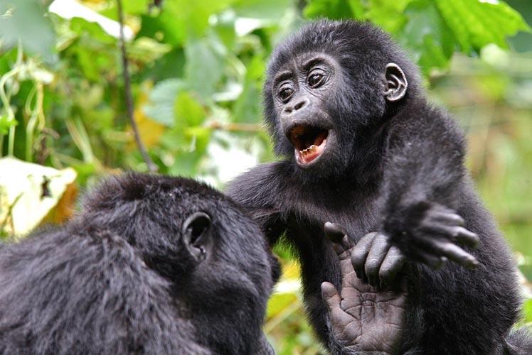 5 Days Gorilla Wonderland Package