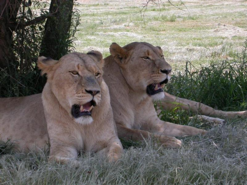 Lesedi Cultural Village And Lion Park Tour Package