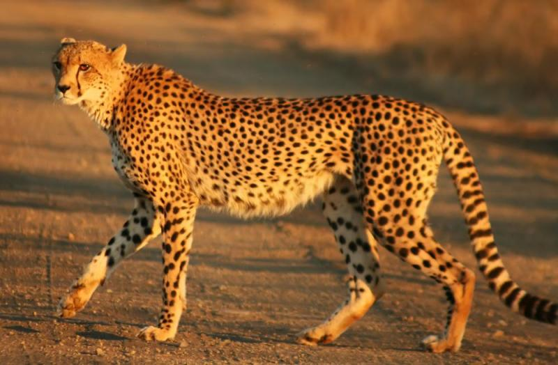 The De Wildt Cheetah Research Centre Package