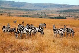 Masai Mara Package