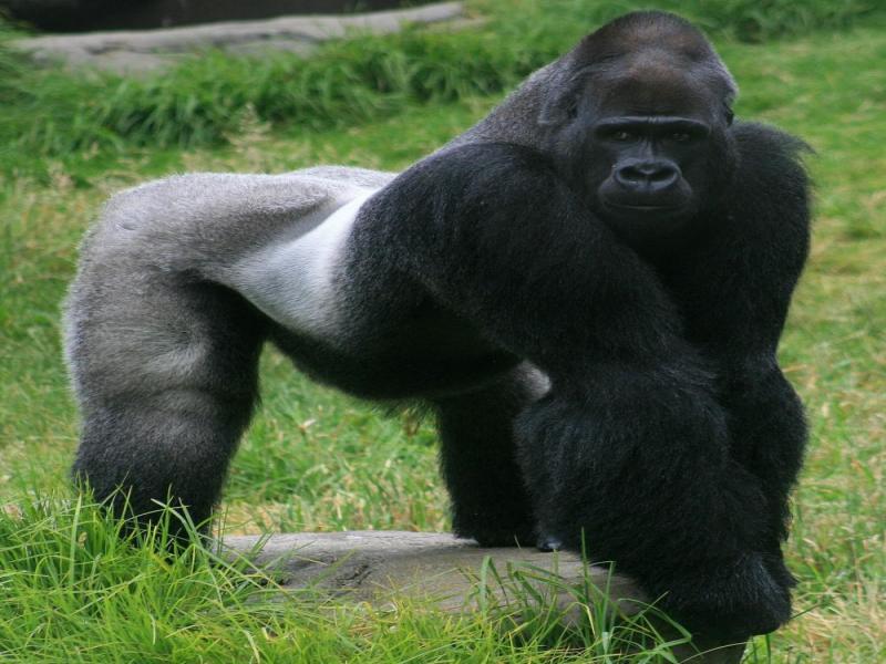 9 Days Gorilla Tour In Uganda Package