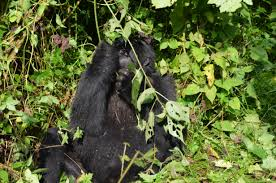 12/14 Days Special Wildlife Tour In Uganda Package
