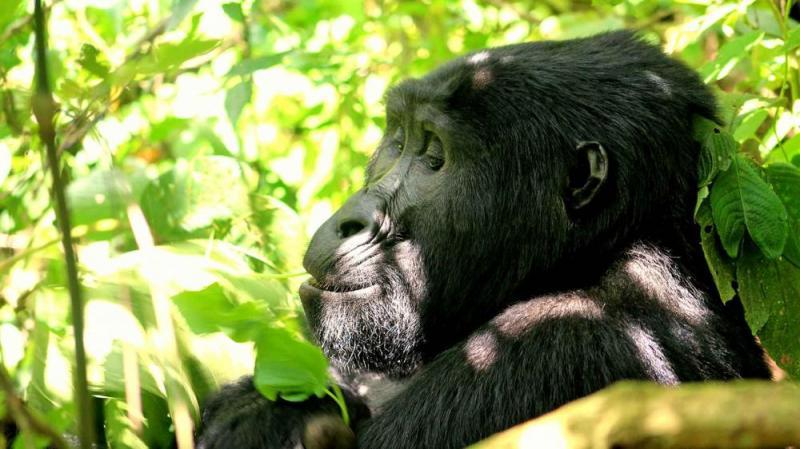 19 Days Gorilla Trekking Safari In Uganda, Rwanda And Kidepo Tour Package