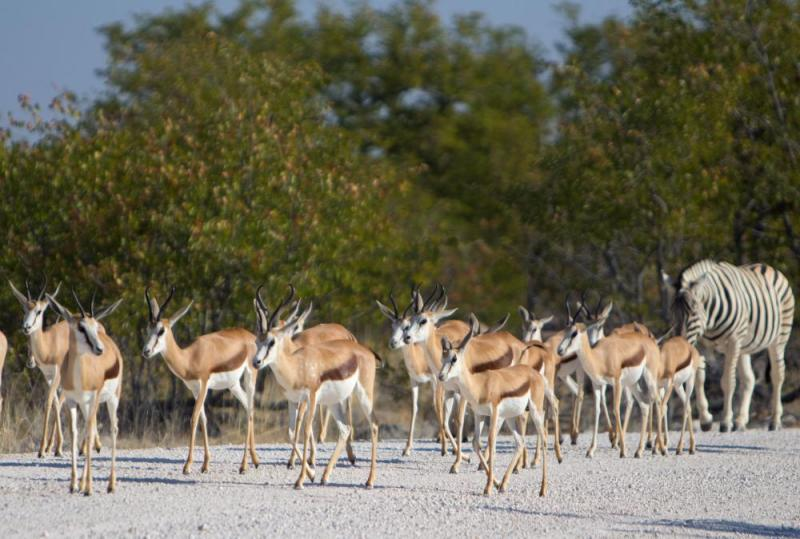 10 Day Wild Namibia Camping Tour