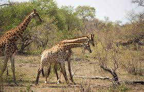 17 Day Delta, Wildlife, Zim & Kruger Group Tour Package