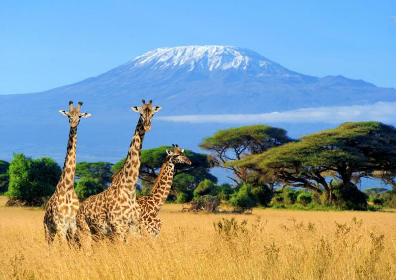 18 Day Grand Kenya & Tanzania Private Tour Package