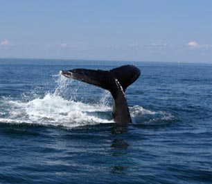 Hermanus Whale Watching Tours  Package