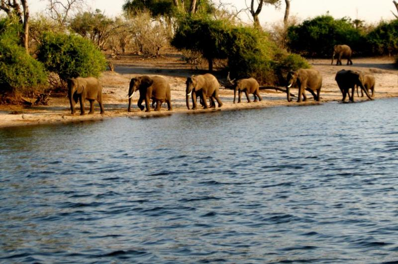 16 Day South Africa, Victoria Falls, And Northern Botswana Safari Package