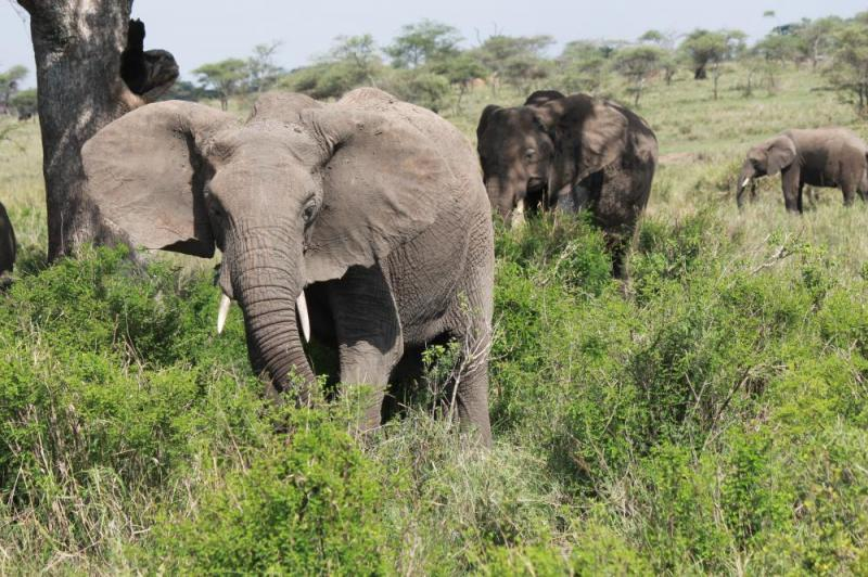 6 Day Luxury Serengeti Adventure Package