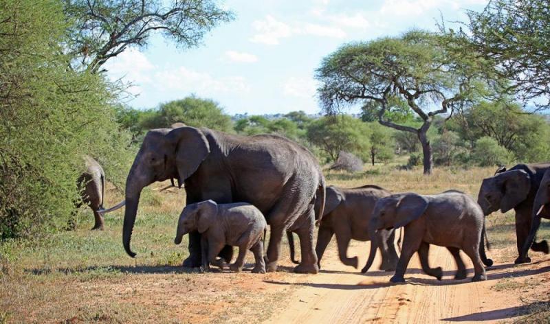 7 Day Southern Tanzania Safari Package