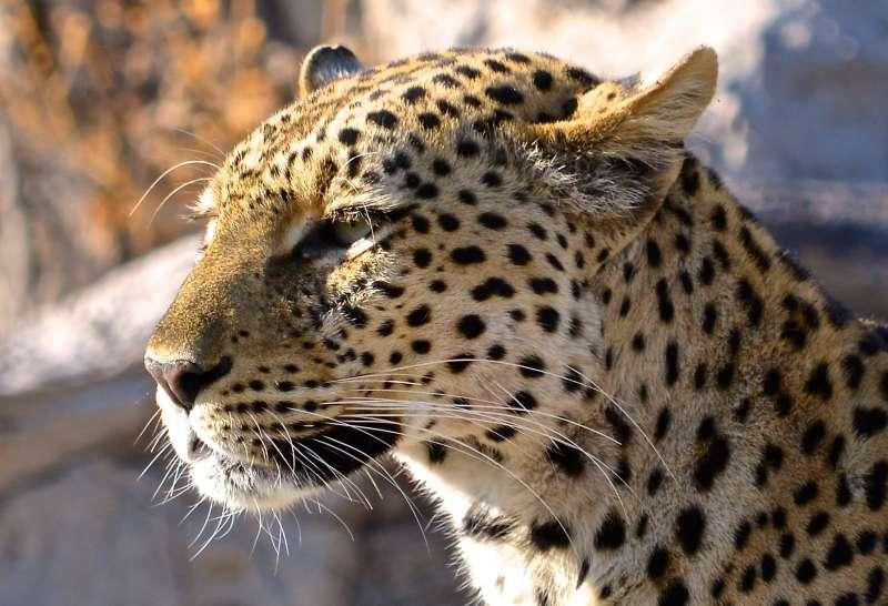 11 Day Grand Southern Tanzania Safari Package