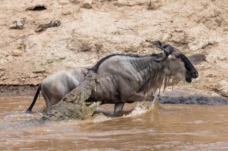 12 Day Wildebeest, Wilderness, And Water Safari Package