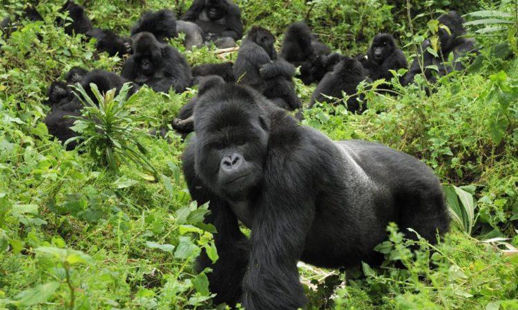 7 Day Gorillas And Wildlife Safari Package