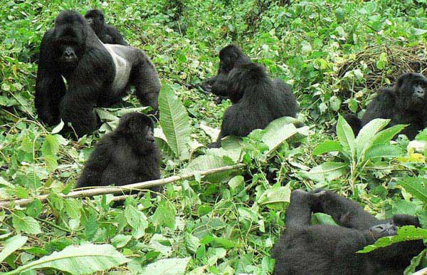 4 Day Rwandan Gorilla Trek Package