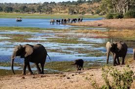 20 Day Garden Rout Sa, Vic Falls & Chobe Np Adventure, Tanzania Safari Tour Package