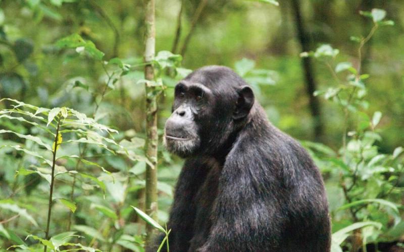 5 Day Rwanda & Uganda Highlights Tour Package