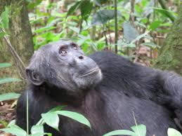 8 Day Team Rwanda Guided Congo Nile Trail Mountain Bike Tour & Chimpanzee Trek Package