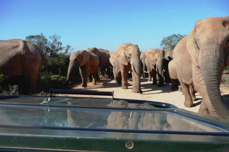Full Day Addo Elephant National Park Tour Package