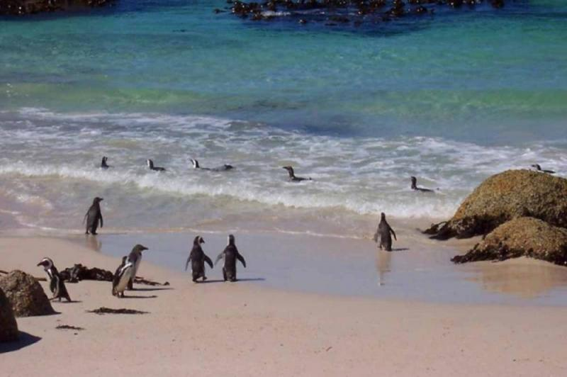 Full Day Cape Point & Cape Of Good Hope Tour Package